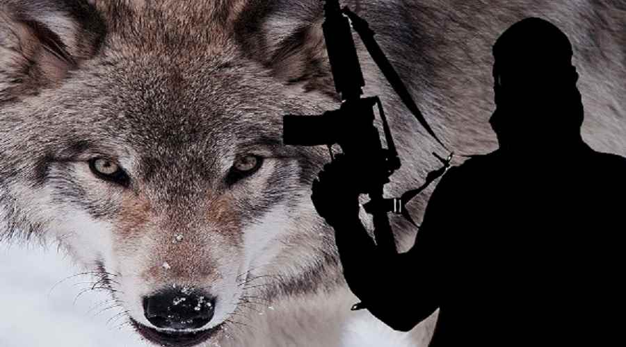 Lone wolf terrorism definitions essay